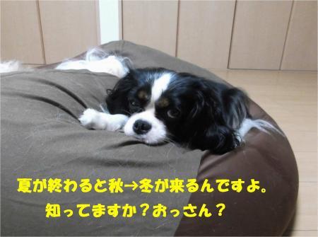 02_convert_20131008172747.jpg