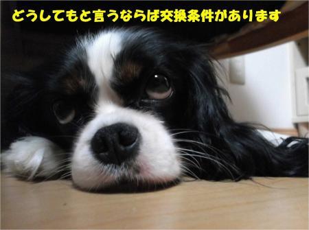 02_convert_20131009181546.jpg