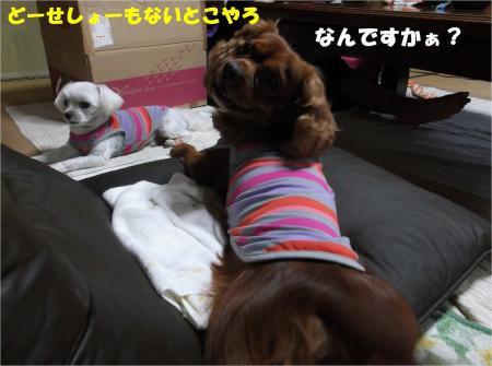 02_convert_20131010174135.jpg