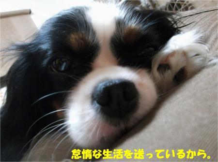 02_convert_20131017195108.jpg