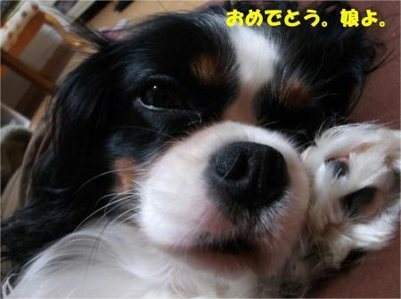 02_convert_20131018170822.jpg