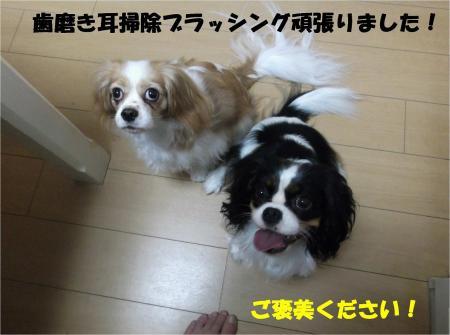 02_convert_20131023175741.jpg