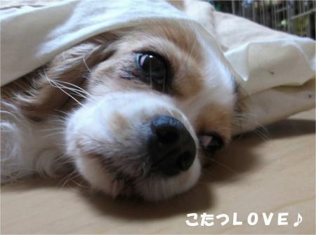02_convert_20131025175942.jpg