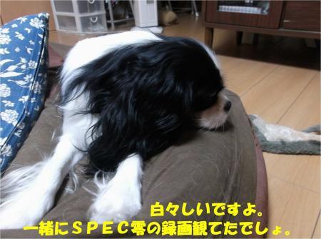 02_convert_20131029195836.jpg