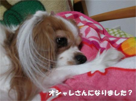 02_convert_20131211184410.jpg