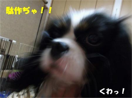 03-2_convert_20130409170537.jpg