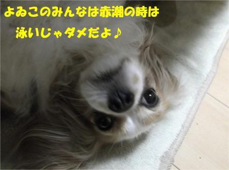 03_convert_20130405192535.jpg