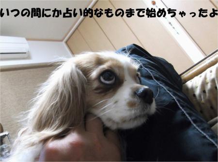 03_convert_20130418180922.jpg