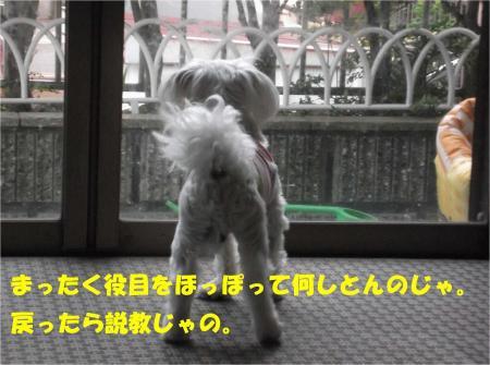 03_convert_20130419172540.jpg