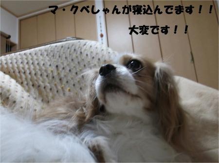 03_convert_20130429090410.jpg