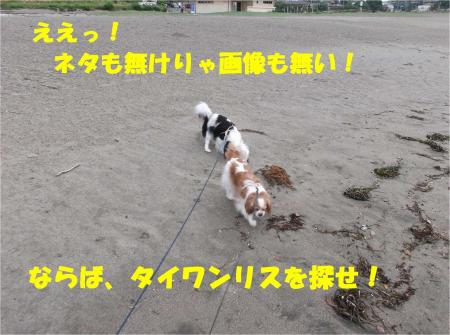 03_convert_20130514183059.jpg