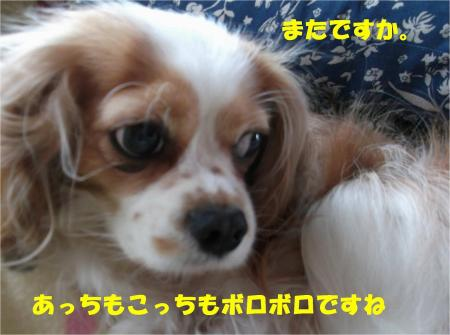 03_convert_20130517172110.jpg
