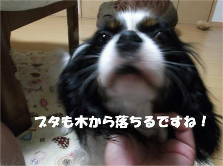 03_convert_20130521190722.jpg
