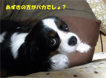 03_convert_20130524171002.jpg