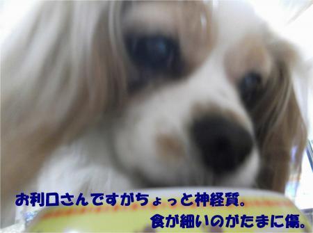 03_convert_20130530164413.jpg