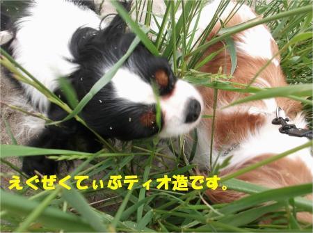 03_convert_20130603170015.jpg