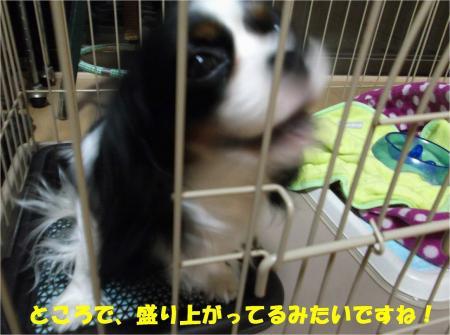 03_convert_20130605185611.jpg