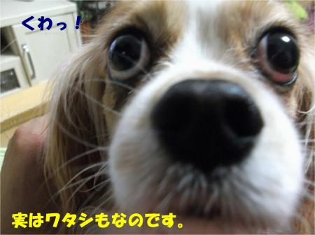 03_convert_20130607184451.jpg