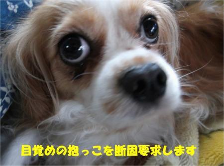 03_convert_20130614180229.jpg