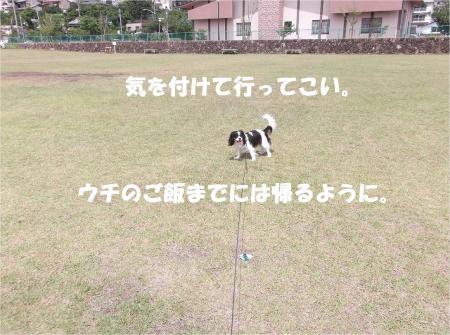 03_convert_20130617180143.jpg
