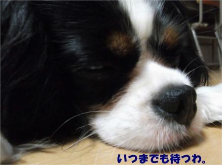 03_convert_20130618174022.jpg