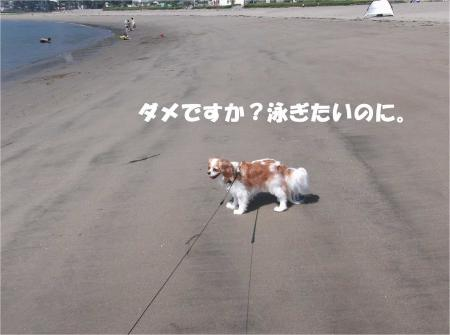 03_convert_20130624172101.jpg