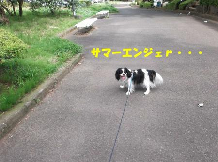 03_convert_20130708171112.jpg