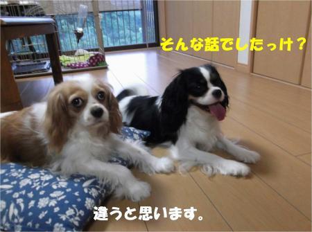 03_convert_20130723153742.jpg