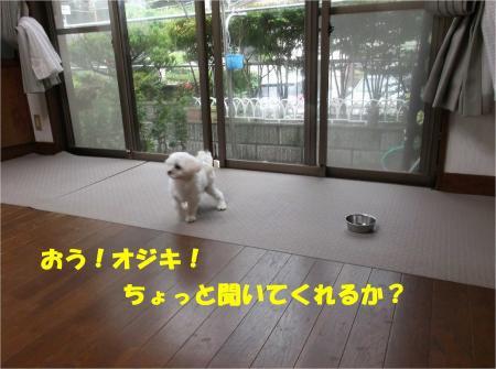 03_convert_20130724161256.jpg