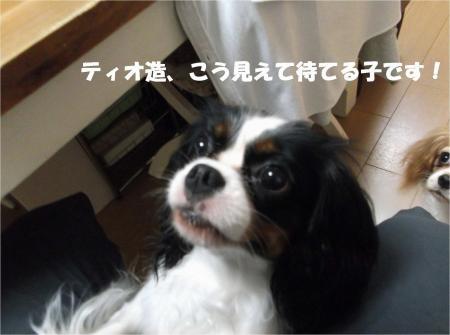 03_convert_20130801174801.jpg