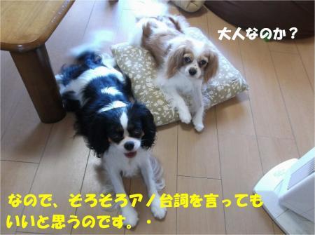 03_convert_20130807174446.jpg