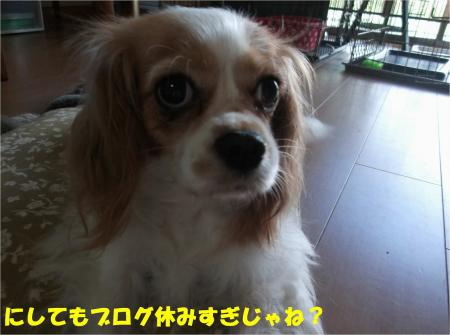 03_convert_20130819173722.jpg