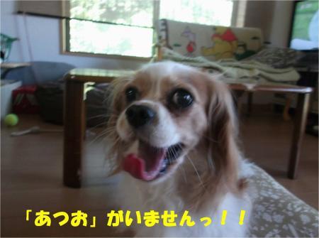 03_convert_20130820181314.jpg