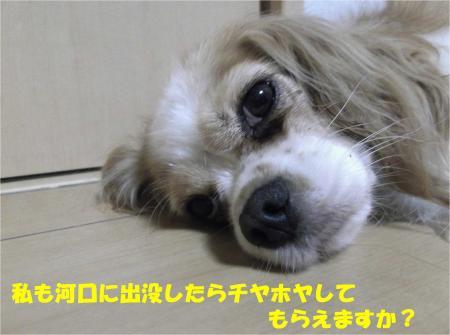 03_convert_20130821173703.jpg
