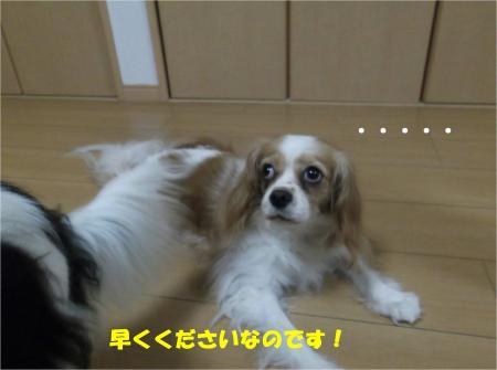 03_convert_20130830181951.jpg
