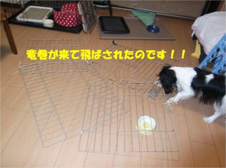 03_convert_20130903175146.jpg