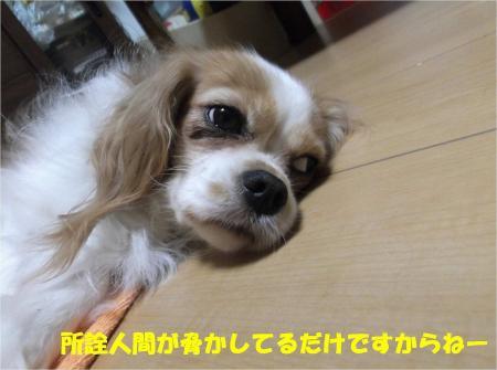 03_convert_20130912182618.jpg