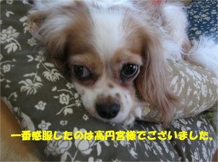 03_convert_20130913172117.jpg