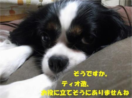 03_convert_20130920184319.jpg