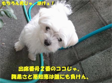 03_convert_20130927185424.jpg