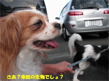 03_convert_20130930093339.jpg