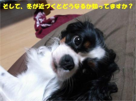 03_convert_20131008172810.jpg
