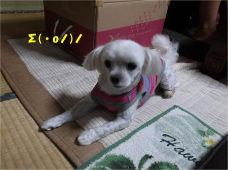 03_convert_20131010174146.jpg