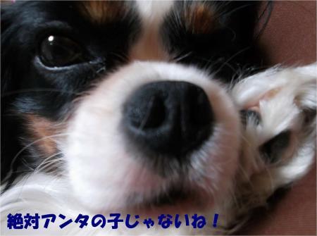 03_convert_20131018170920.jpg