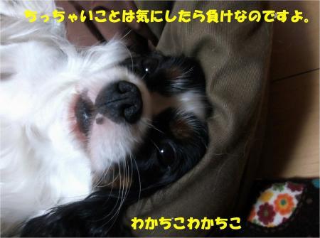 03_convert_20131030165351.jpg