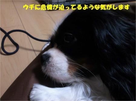03_convert_20131211184421.jpg