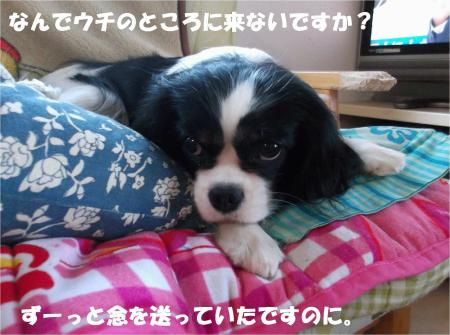 03_convert_20131212173818.jpg
