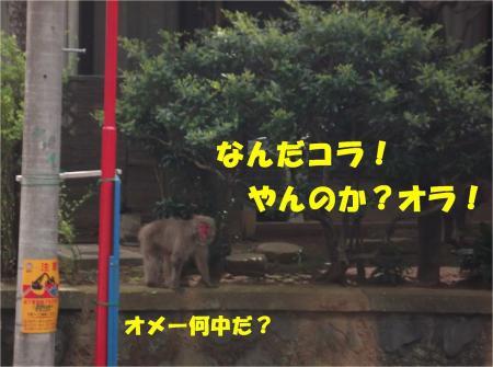 04-1_convert_20130410180959.jpg