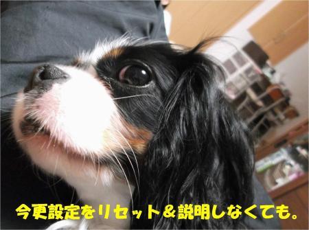 04_convert_20130409170549.jpg