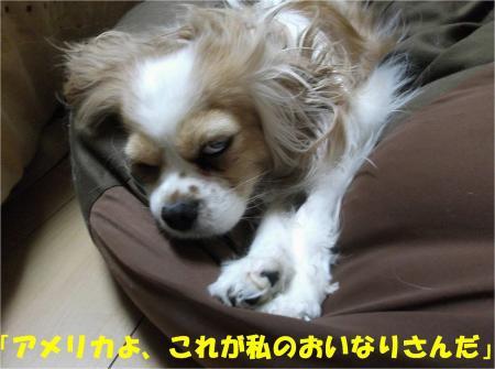 04_convert_20130411163902.jpg